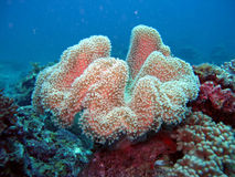 Sea Corals and Plants Royalty Free Stock Images