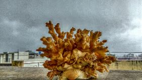 Sea corals Stock Photography