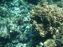 Sea corals. View of the sea corals Royalty Free Stock Photos