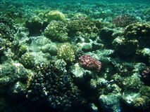 Sea corals. View of the beautiful sea corals Royalty Free Stock Photography