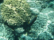 Sea corals. View of the sea corals and fish Stock Photography