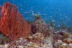 Sea of Cortez Royalty Free Stock Image