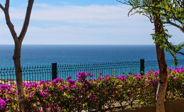 Sea of Cortez in Mexico. Sea of Cortez on the horizon with a beautiful display of bougainvillea along the fence Stock Images