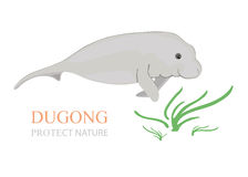 Sea cow (dugong dugong). Sea cow (dugong dugong) with sea grass on white background vector illustration