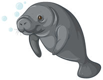 Sea cow Royalty Free Stock Images