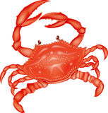 Sea crab Royalty Free Stock Photo