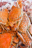 Sea crab. Crabs boiled and ready to eat stock photo
