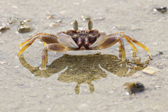 Sea Crab. On the beach Stock Image