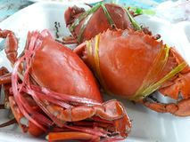 Sea crab boiled new orange flesh sweet delicacy fragrant fresh from the sea. royalty free stock photography