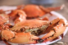 Sea crab boiled in restaurant at Chantaburi province Thailand. Fresh, delicious and sweet Royalty Free Stock Photography