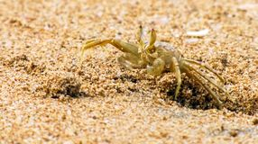 Sea crab in the sand stock images
