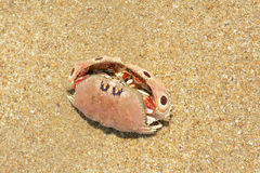 Sea crab Royalty Free Stock Images