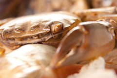 Sea crab on shell Stock Images