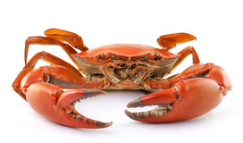 Image result for crab white background