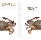 Sea crab Stock Photos
