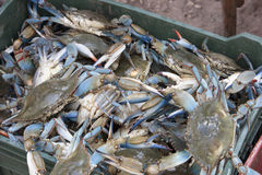 Sea crabs on plastic box Stock Image