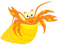 Sea crawfish in his shell. Vector clip-art illustration of a orange crawfish looking out of a yellow shell and waving his claws Royalty Free Stock Image