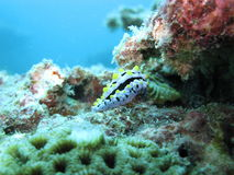 Sea creature and coral reef Royalty Free Stock Photos