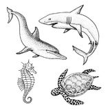 Sea creature dolphin and white shark, cheloniidae or green turtle and seahorse. engraved hand drawn in old sketch. Vintage style. nautical or marine, monster Stock Images