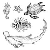 Sea creature or Fishes cheloniidae or green turtle and seahorse. red lionfish and great hammerhead shark. engraved hand. Sea creature cheloniidae or green turtle Royalty Free Stock Photos