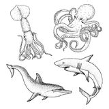 Sea creature or fishes dolphin and white shark. octopus and squid, calamari. engraved hand drawn in old sketch, vintage. Sea creature dolphin and white shark Royalty Free Stock Photos