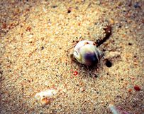 Sea creature Royalty Free Stock Photo