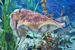 Sea creature Stock Photos