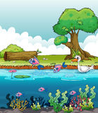 Sea creatures with a duck Royalty Free Stock Photo