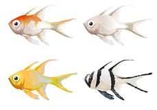 Sea creatures. Illustration of the sea creatures on a white background Stock Image