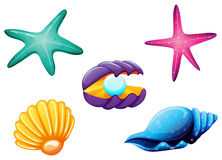 Sea creatures vector illustration
