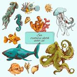 Sea creatures sketch colored. Sea fishes and ocean creatures sketch colored decorative icons set  vector illustration Royalty Free Stock Images