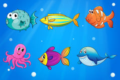 Sea creatures under the deep sea Stock Photo
