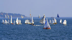 Sea crowded with sailboats Royalty Free Stock Photos