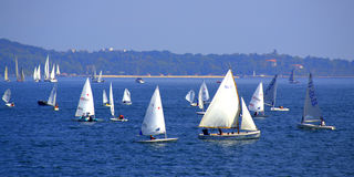 Sea crowded with sailboats Stock Images
