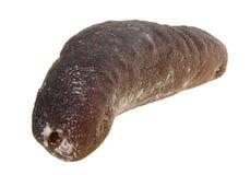 Sea cucumber. close up dried sea cucumber Stock Images