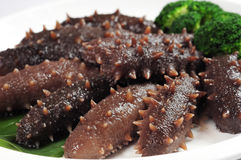 Sea cucumber Stock Images