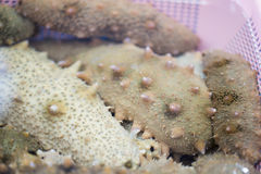 Sea cucumbers (echinoderms) for sale at fish market, South Korea. Sea cucumbers are echinoderms from the class Holothuroidea.They are marine animals with a royalty free stock photography