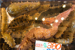Sea cucumbers in water container for retail sale in Japanese market Royalty Free Stock Images