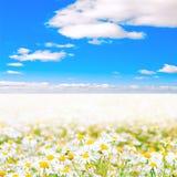 Sea of daisies Royalty Free Stock Photos
