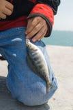 Sea dark blue perch. Stock Images