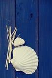 Sea decoration Stock Photo