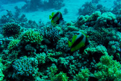 Sea deep or ocean underwater with coral reef as a background Stock Images