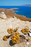 Sea in delos   old ruin site Royalty Free Stock Image