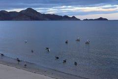 Sea, Desert, Beach and Birds - Baja California Royalty Free Stock Images