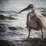 Sea Diaries stock photos