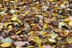 Sea of diverse fall leaves Stock Photos