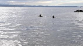 Sea diving. Two people were diving at Puget Sound near Seattle stock video