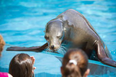Sea dog playing with childs, seal royalty free stock images