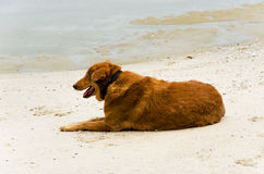 Sea Dog Royalty Free Stock Images