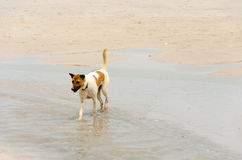 Sea Dog Stock Images
